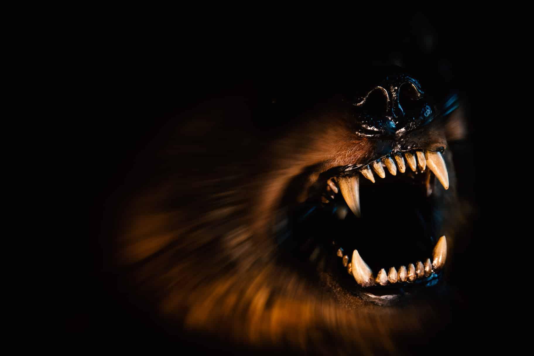 animal baring teeth