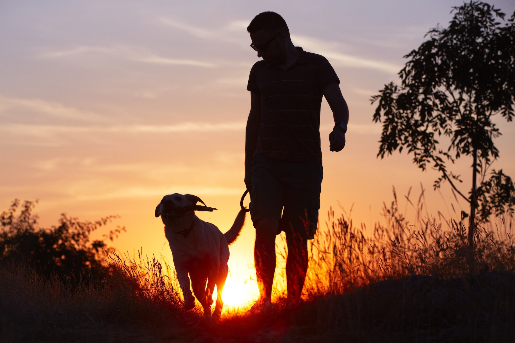 dog with man on hike