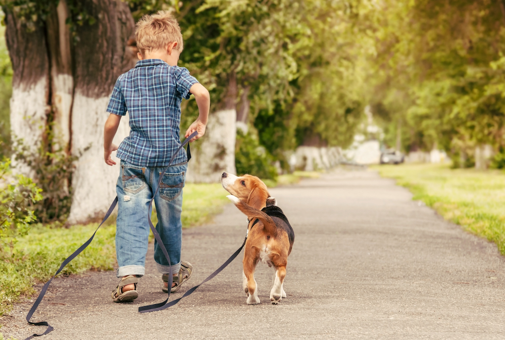 boy walking with dog