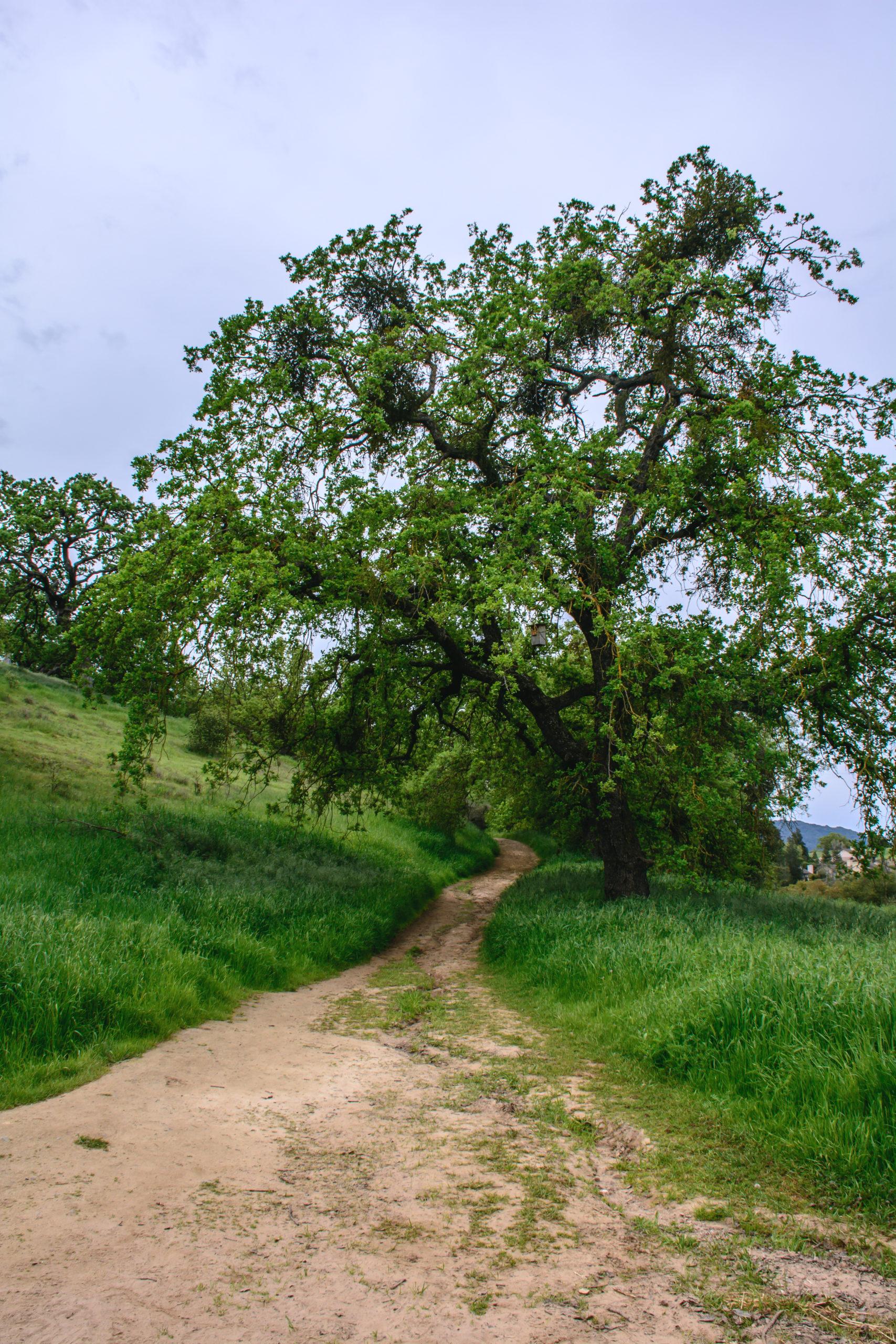 tree & path