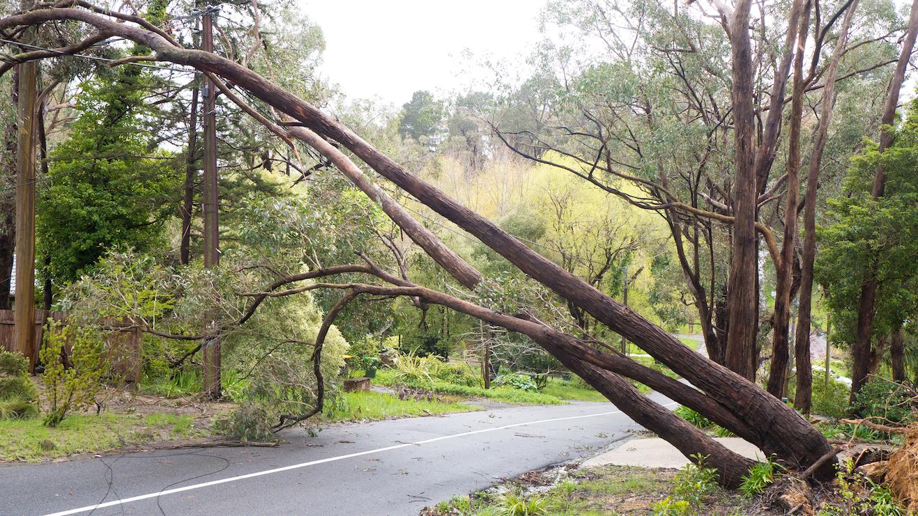 powerline accident